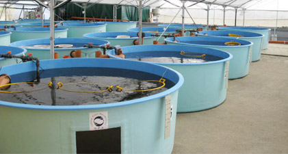 Intensive Aquaculture by RAS -A technology based agriculture
