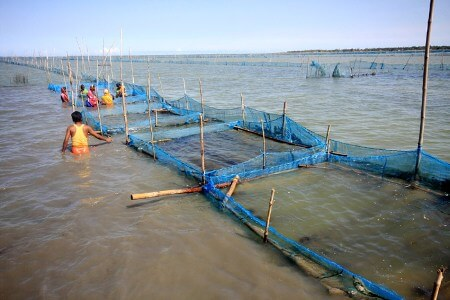 seaweed-cultivation