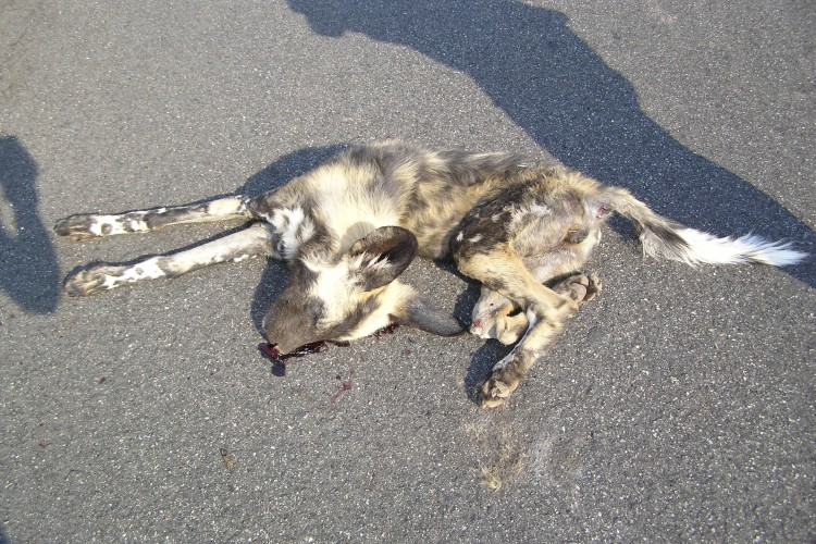 To open a Call Center And Ambulance  for Accidental Animals Or Dead Bodies  OF Animal on Road.