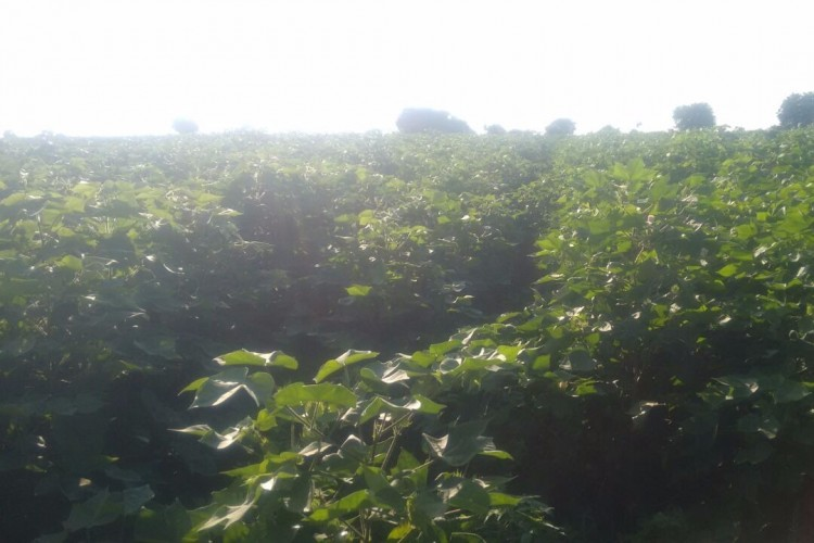 Help me raise funds for my agriculture