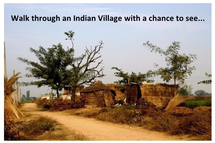 South India Rural Village communities Problems Rectification