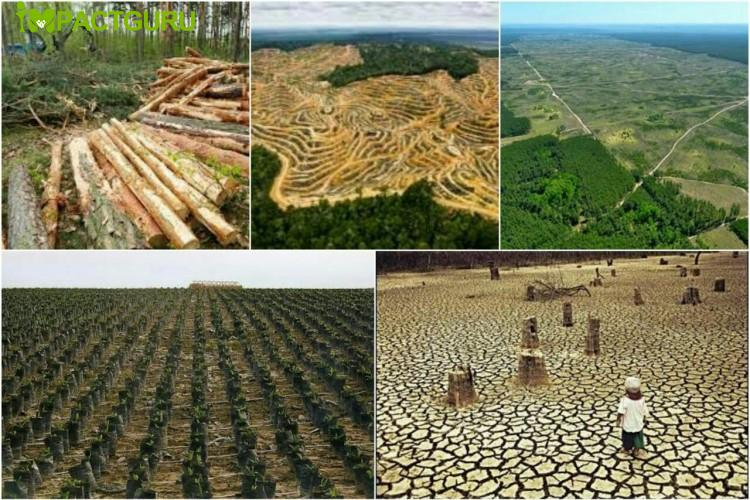 SAVE TREES THROUGHOUT THE WORLD INDIRECTLY