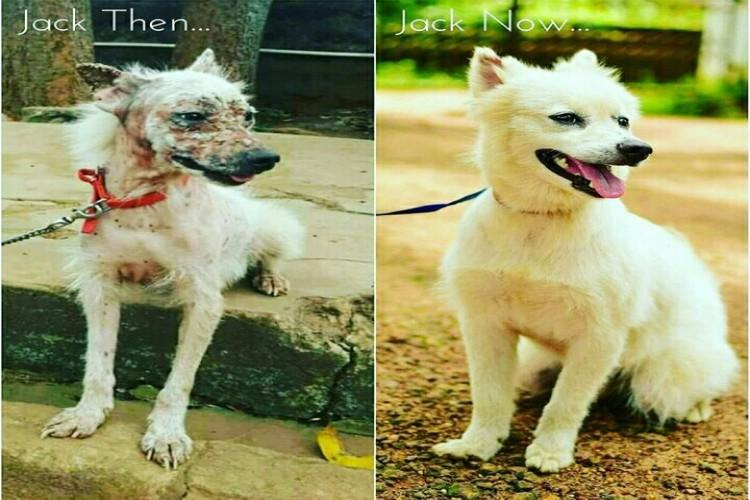 Help fund for the needy stray animals
