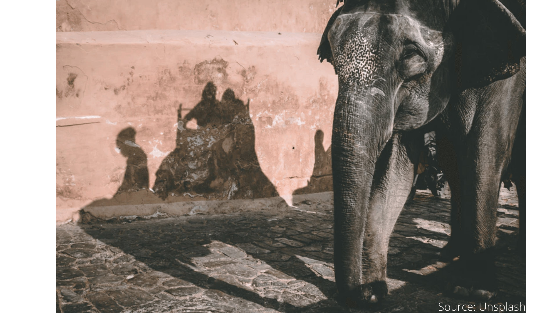 World Elephant Day-Here Are Ways To Help Animals On ImpactGuru